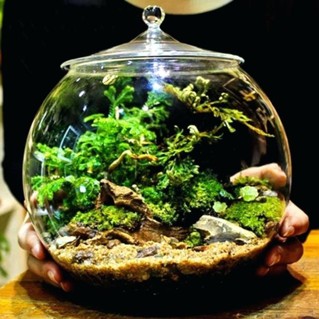 moss-terrarium-low-light-closed-care-reindeer